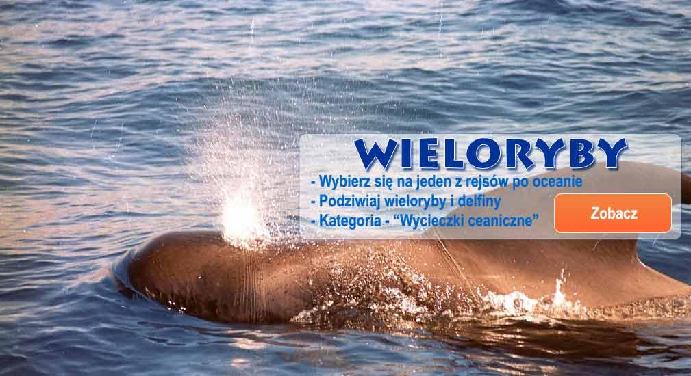 Teneryfa - Wycieczki oceaniczne wieloryby i delfiny